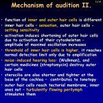 mechanism of audition ii