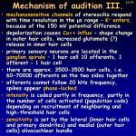mechanism of audition iii