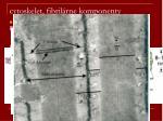 cytoskelet fibril rne komponenty3