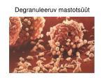 degranuleeruv mastots t