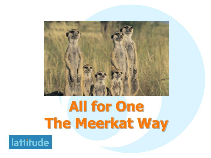 all for one the meerkat way n.