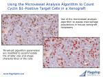 using the microvessel analysis algorithm to count cyclin b1 positive target cells in a xenograft