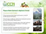 papua new guinea s agitana forest
