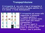transpeptidazione