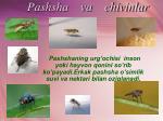 pashsha va chivinlar