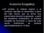 anatom a ecogr fica