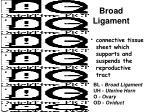 broad ligament