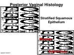 posterior vaginal histology