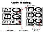 uterine histology