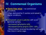 iv commensal organisms1