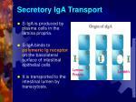 secretory iga transport