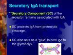 secretory iga transport1