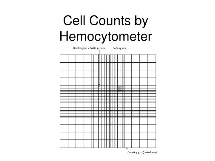 cell counts by hemocytometer n.