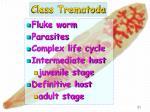 class trematoda