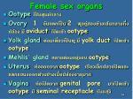 female sex organs