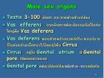male sex organs