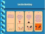 lectin blotting