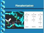 phosphorlyation