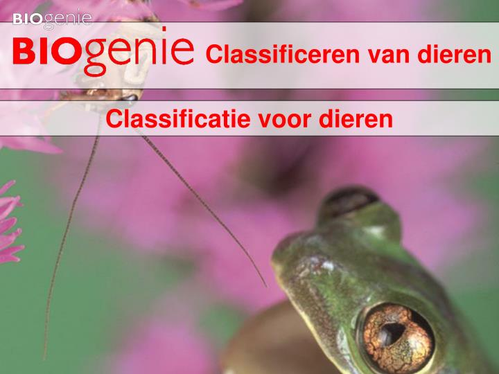classificeren van dieren n.