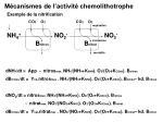 m canismes de l activit chemolithotrophe
