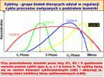 cykliny grupa bia ek bior cych udzia w regulacji cyklu proces w zwi zanych z podzia em kom rki