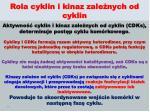 rola cyklin i kinaz zale nych od cyklin