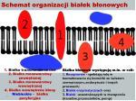 schemat organizacji bia ek b onowych