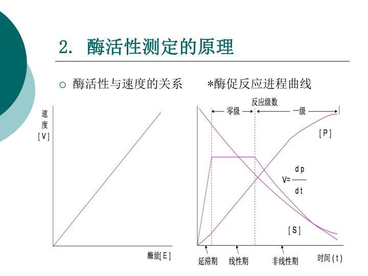 酶活性与速度的关系    *酶促反应进程曲线