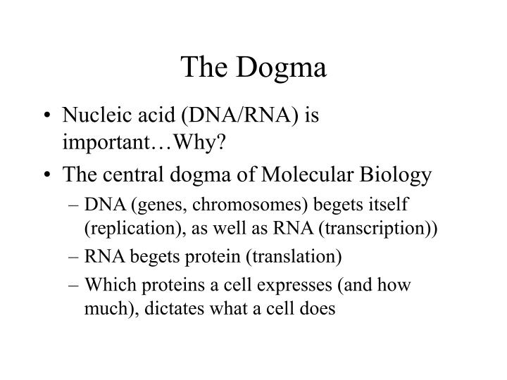 the dogma n.