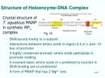 structure of holoenzyme dna complex