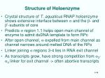 structure of holoenzyme