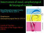 innervation of nasal oropharyngeal laryngeal cavities