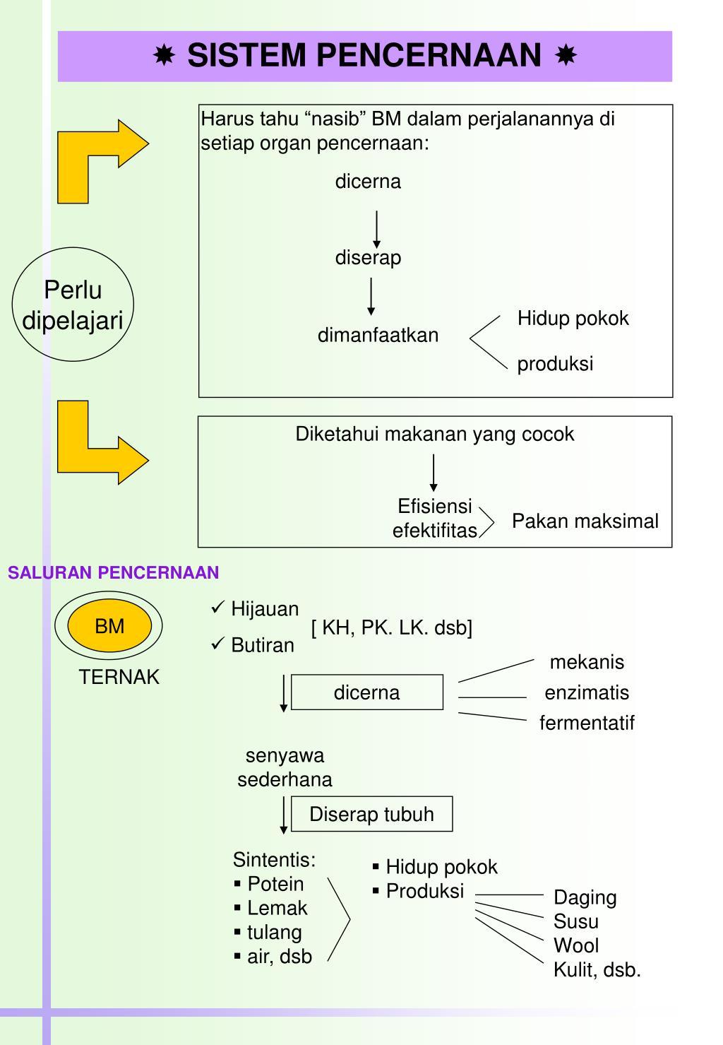 Ppt Sistem Pencernaan Powerpoint Presentation Free Download Id 6989799