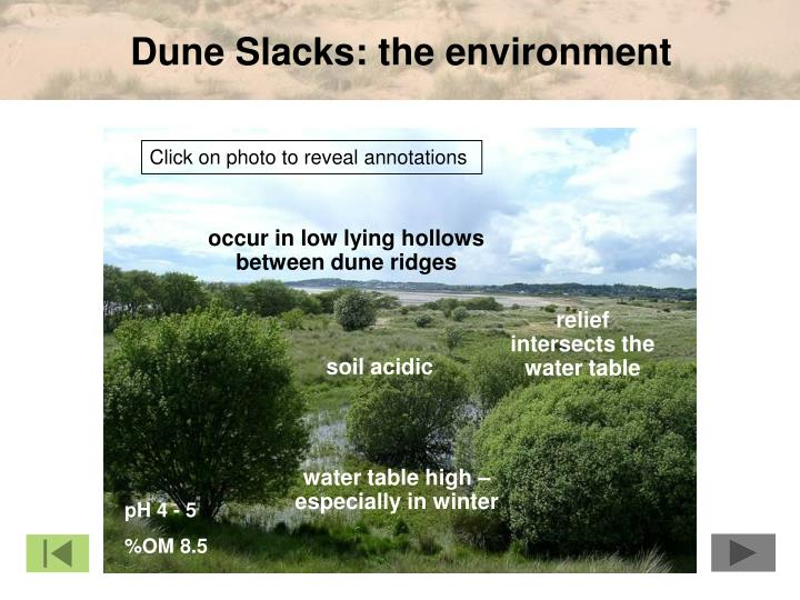 Dune Slacks: the environment
