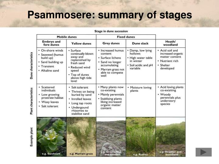 Psammosere: summary of stages