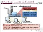 how dns data is stored and maintained