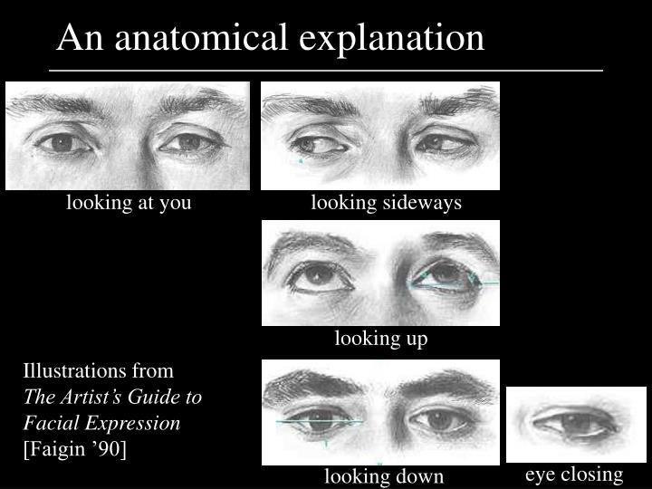 An anatomical explanation