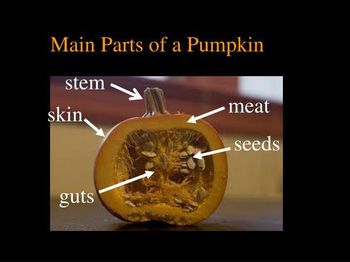 Main Parts of a Pumpkin