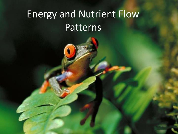 Energy and Nutrient Flow Patterns