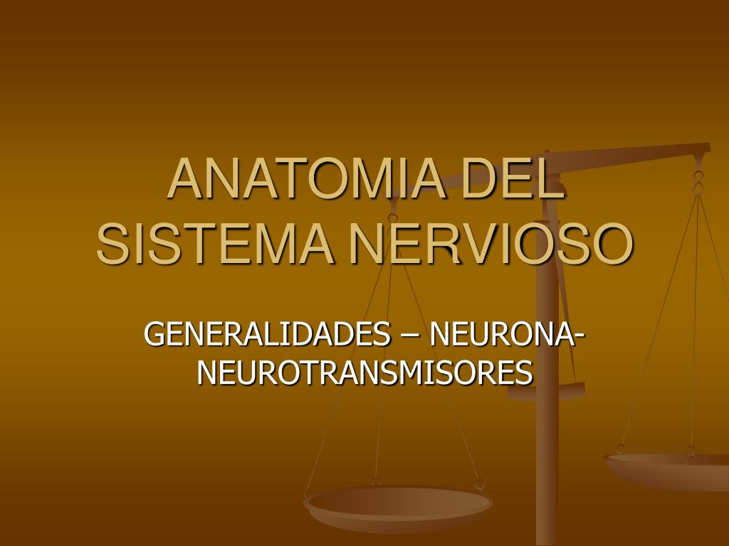 PPT - ANATOMIA DEL SISTEMA NERVIOSO PowerPoint Presentation - ID:6995736