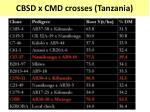 cbsd x cmd crosses tanzania