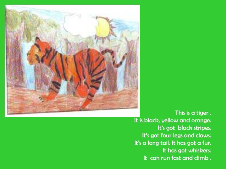 This is a tiger .