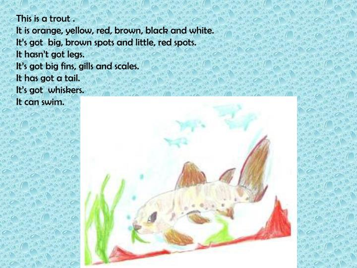 This is a trout .