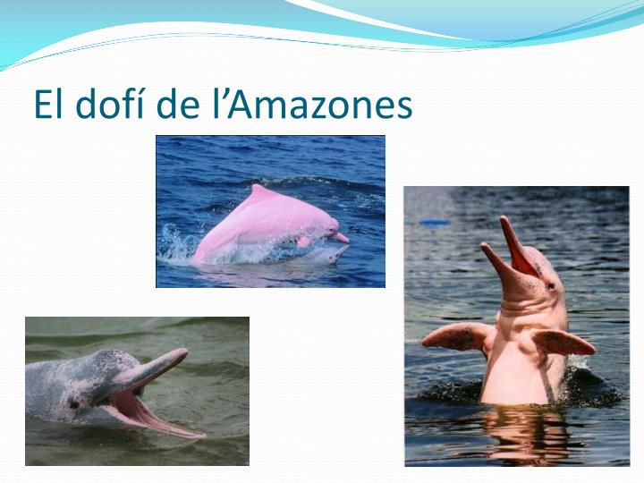 El dofí de