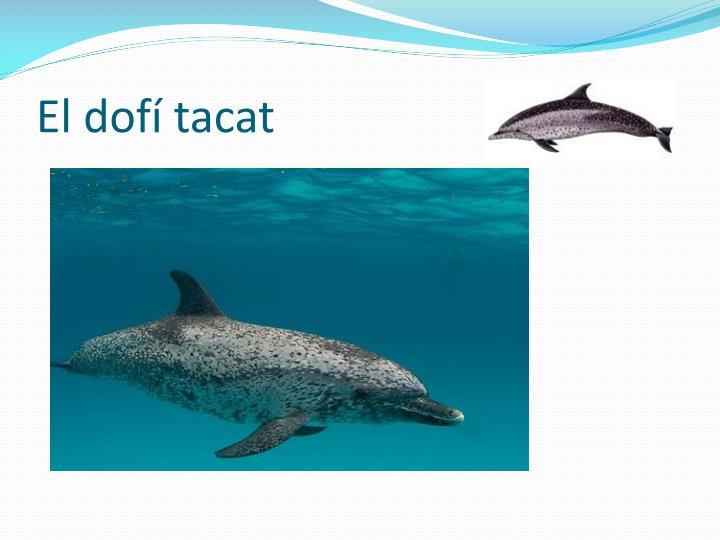 El dofí tacat