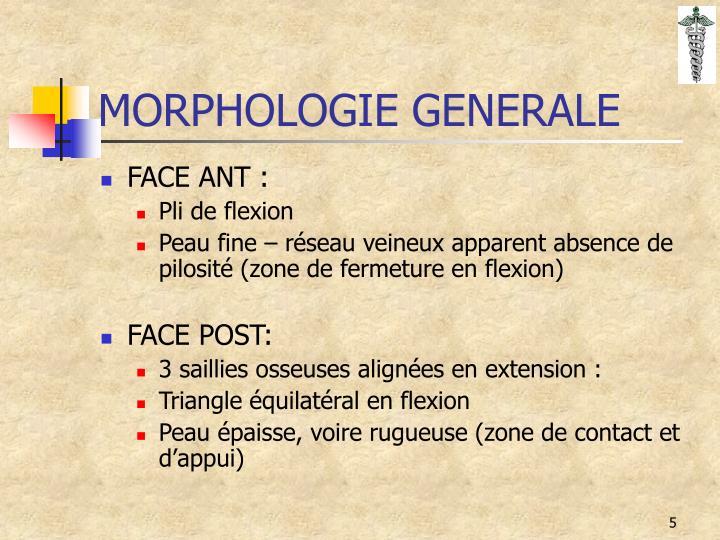MORPHOLOGIE GENERALE