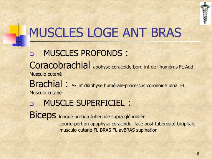 MUSCLES LOGE ANT BRAS