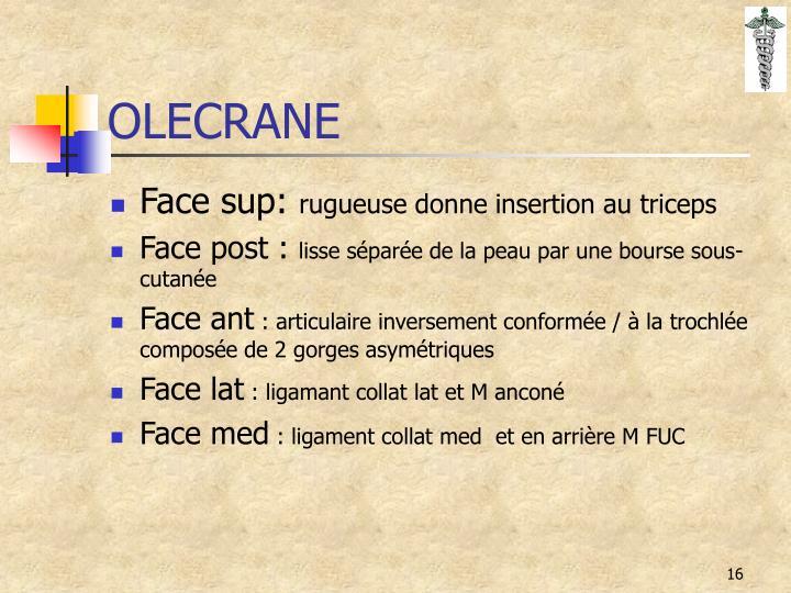 OLECRANE