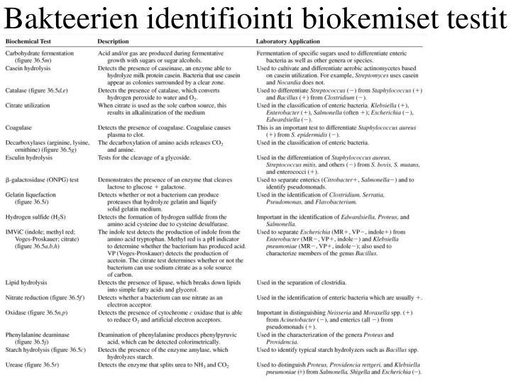 Bakteerien identifiointi biokemiset testit