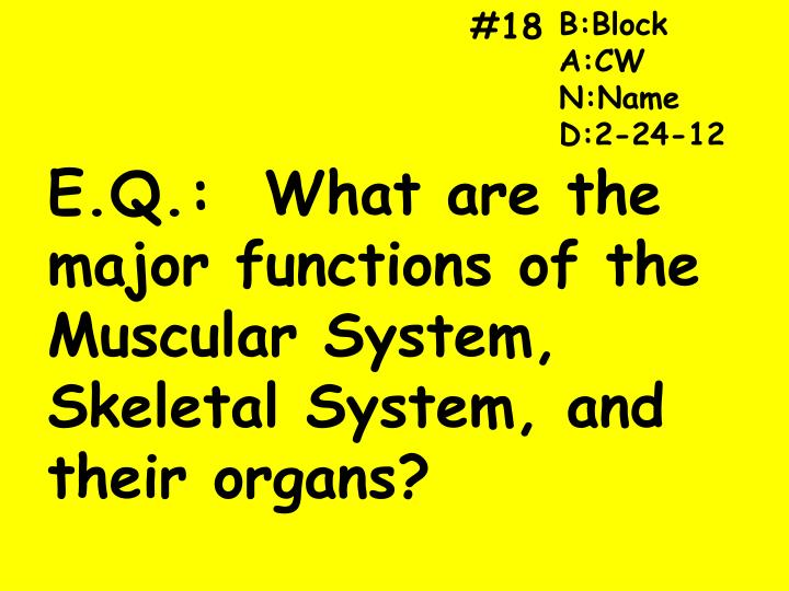 PPT - E.Q.: What are the major functions of the Muscular System ...